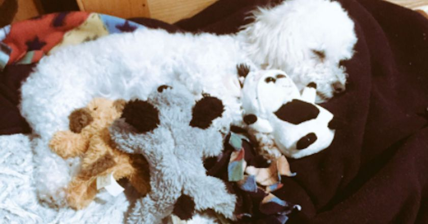 Mourning Dog Takes Care Of Stuffed Animals Like Her Own Puppies